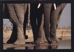 BOTSWANA - Eléphants Et Impala - Botswana