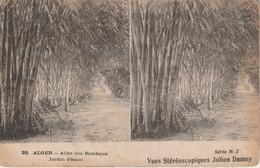 Algérie - ALGER - Allée Des Bambous - Jardin D' Essai - Vues Stéréoscopiques Julien Damoy - Cartoline Stereoscopiche