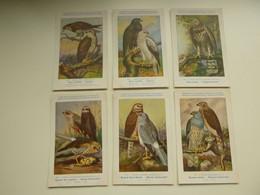 Beau Lot De 9 Cartes De Fantaisie Oiseau  H. Dupond  Oiseaux  Nrs 105 - 113    Mooi Lot Van 9 Postkaarten Vogels  Vogel - 5 - 99 Postcards