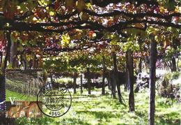 CARTE MAXIMUM- MAXICARD - CARTOLINA MAXIMA - MAXIMUM CARD - PORTUGAL - VIEILLES VIGNES - RAMADA DE RAISINS DANS LE MINHO - Agriculture