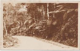 Post Card  Foto  (Ecuador) Sur La Route De  Guayaquil à Salinas   Photo Prise Par La White & Co Circa 1910 - Ecuador