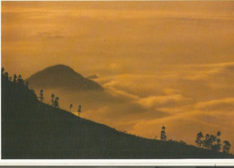 CPM, Inde N°9977, Landscape Kodaikanal, S. India ,Phot. V.B.Anand ,Ed. The Visual Info..1990 - Inde