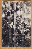 As098 ⭐ Ethnic CEYLON Tree Climbers Grimpeurs Bambou 1907 à BLONDEL Rue Legendre Batignolles -PLÂTE CEYLAN Skri-Lanka - Sri Lanka (Ceylon)