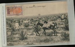 Afrique Mali  SOUDAN Français  SOUDAN PLANTATION SIZAL A KAYES (Mai 2021 23) - Sudan