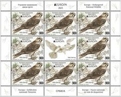 SERBIA 2021,NEW 12.05,EUROPA CEPT,ENDANGERED NATIONAL WILDLIFE,FAUNA,BIRDS,FALCO,SHEET, MNH - Ohne Zuordnung