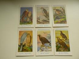 Beau Lot De 9 Cartes De Fantaisie Oiseau  H. Dupond  Oiseaux  Nrs 114 - 122    Mooi Lot Van 9 Postkaarten Vogels  Vogel - 5 - 99 Postcards