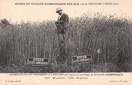 ORNEX - Effets Du Sulfate D'Ammoniaque Sur Blé Chez M Chevalier - Bureau De Renseignements Agricoles Lyon (voir 2 Scans) - Otros Municipios