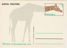 Pologne 1973 Entier Girafe Zoo De Poznan Poland Stationery Card - Giraffes