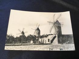 Mallorca, Manacor, Moulins Typiques - Mulini A Vento