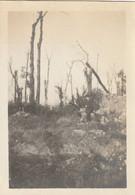 Photo Octobre 1919 Parc De NOYELLES-SUR-ESCAUT (près Cambrai) - Arbres Fracassés (A229, Ww1, Wk 1) - Other Municipalities