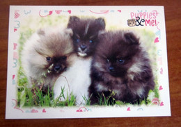 Puppies & Me! Panini  N. 23 Figurina Adesivo Sticker - Edición Italiana