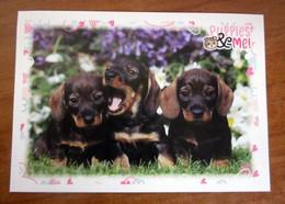 Puppies & Me! Panini  N. 12 Figurina Adesivo Sticker - Edición Italiana