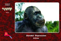 Set 4 Cartes Postales, Hommes Prehistoriques, Human Fossil Sites, Danakil  (Eritrea), Australopithecus Aethiopicus - History