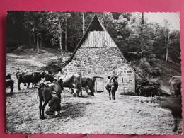 Auvergne Pittoresque - La Traite Des Vaches Au Buron - Excellent état - R/verso - Auvergne