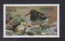Saint Pierre Et Miquelon (2021) - Set -  /  Oiseaux - Vogel - Birds - Aves - Ohne Zuordnung