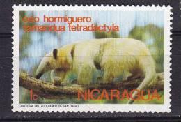 Nicaragua.  Fourmilier à Collier.  Tamandua Tetradactyla   ** - Unclassified