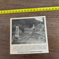 1929 PATI2 Les Braseros Dans Les Plantations D Orangers - Non Classificati