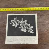 1929 PATI2 L'orchidée Rare De Mayer De Weldingham Vuylstekeara Elatior Varutz - Non Classificati