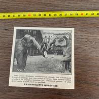 1929 PATI2 L Escarlopette Improvisée Cirque Femme Supportée Par La Trompe De 2 éléphants - Non Classificati
