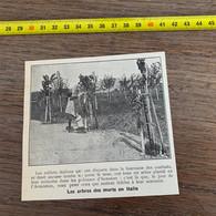 1929 PATI2 Les Arbres Des Morts En Italie - Non Classificati