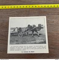 1929 PATI2 Vaisseau Du Désert Attelage Chameau Khirgises Parcours Des étendues Herbeuses Ou Salines - Non Classificati