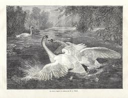 GRAVURE De 1884.. Le Duel .. Tableau De M. J. WOLF... CYGNE - Prints & Engravings