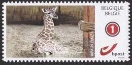 DUOSTAMP** / MYSTAMP** - Pairi Daiza -  Girafe / Giraf / Giraffe - Autocollant / Zelfklevend / Selbstklebend - Giraffes