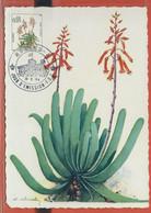 CACTUS MONACO CARTE MAXIMUM DE 1964 - Cactus