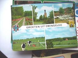 Nederland Holland Pays Bas Dwingeloo Met Veel Groen En Met Schapen - Dwingeloo