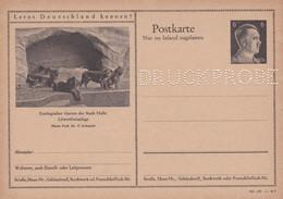 Carte Entier Postal Ganzsache Postkarte Druckprobe Zoologischer Garten Der Stadt Halle - Enteros Postales