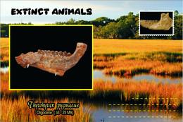 Vignettes De Fantaisie, Extinct Animals , Hyracoidea, Thyrohyrax Pygmaeus - Fantasy Labels