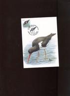 Belgie 3087 Maximumkaart Buzin Birds Bruxelles - 2001-2010