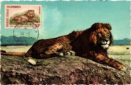 Cameroun - Carte Maximum - Lion De L'atlas - Cameroon