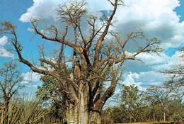 1 AK Simbabwe Zimbabwe Früher Rhodesien * BIG TREE Bei Den Victoria Fällen * - Zimbabwe