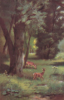 Fantasiekaart  Met  Reeën    /  Hooglede 1908 - Unclassified