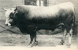 28, Taureau De La Race Aubrac. (12 Aveyron) - Sin Clasificación