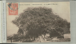 Madagascar - MAJUNGA -  UN BAOBAD à Majunga ( Mai 2021 131) - Madagascar