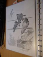 A.Buzin Tekening Berenzwaluw - 1985-.. Birds (Buzin)