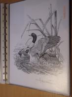 A.Buzin Tekening Bergeend - 1985-.. Birds (Buzin)