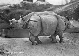 Photo Cpsm BALE. Le Zoo 1954 Rhinocéros (pour Arnouville-les-Gonesse)... - BS Basle-Town