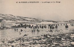 St Pierre Et Miquelon, Le Patinage Sur Les Etangs - Saint-Pierre-et-Miquelon