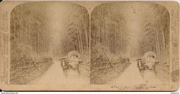 Photo Stéréo : A Vista In A Bamboo Grove, KYOTO, Japan - 1900 By Strohmeyer & Wyman (BP) - Photos Stéréoscopiques