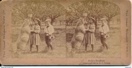 Photo Stéréo : Molly's Breakfast - 1897 By R. Y. Young - Mouton & Enfants (BP) - Photos Stéréoscopiques