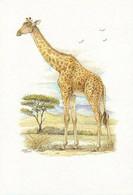 Art Print (25.5 X 17.5 Cm) - 1.238 - Giraffe, Giraffa Camelopardalis, Girafe, Giraffe - Unclassified