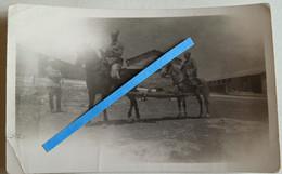 1936 Algérie Chasseurs D'Afrique Transport Blessé Cacolet Civière Cavalerie Coloniale Tranchée Poilu Photo Ww2 - Guerra, Militari