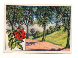 Image Série 13Bild 1Baume Des Deutschen Waldes Esche Echte Wagner Margarine - Format : 10x7cm - Other