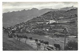 Vercorin Sur Sierre, Le Jour De La Dèsalpe. Circulée En 1963 VERCORIN (Valais). Wallis. Vaches. Kuh. - VS Valais
