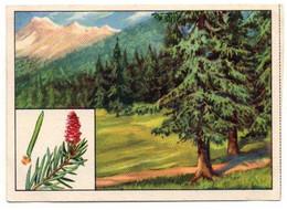 Image Série 13Bild 2Baume Des Deutschen Waldes Fichte Echte Wagner Margarine - Format : 10x7cm - Other