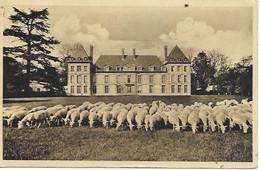 60-Château De Mortefontaine, MOUTONS Sur La Pelouse ,Circulé.(*) - Non Classificati