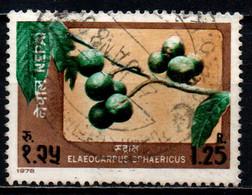 NEPAL - 1978 - Elaeocarpus Sphaericus - USATO - Nepal